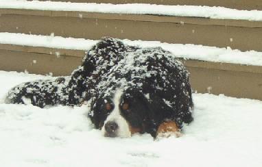 Frío en la nieve...