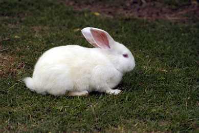 Mil conejos blancos