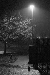 Noche en el camino